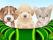 Igra Briga i čuvanje za Mačke i Psiće Igrica
