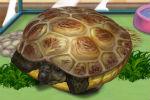 Igrice Kornjača Za Djevojčice – Igre Životinja