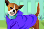Dress Up Your Dog – Animal Games